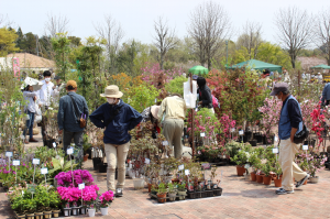 It is garden plant Festival now being held! (4/13-21)